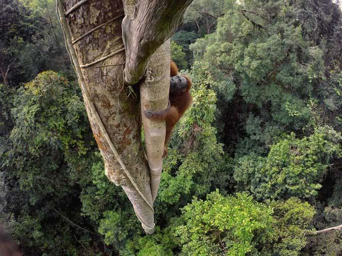 20 από τις κορυφαίες φωτογραφίες του National Geographic για το 2016 (19)