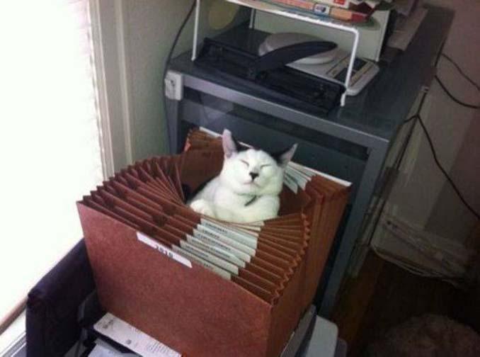 Μέρη που πιθανότατα δεν θα ψάχνατε για τη γάτα σας (2)