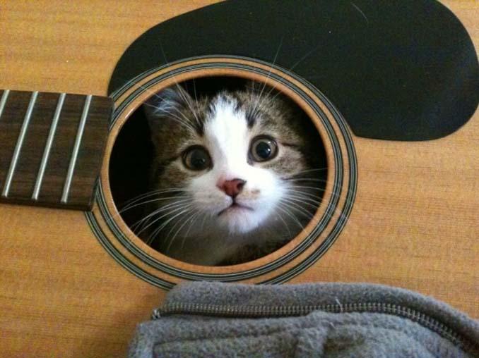 Μέρη που πιθανότατα δεν θα ψάχνατε για τη γάτα σας (4)