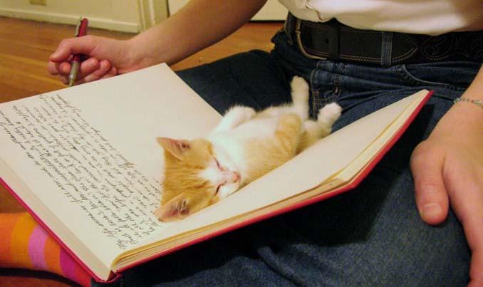 Μέρη που πιθανότατα δεν θα ψάχνατε για τη γάτα σας (6)