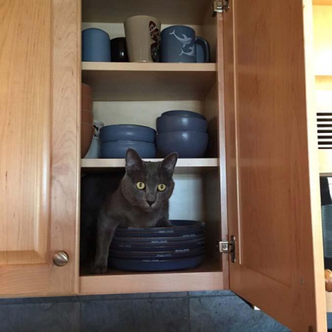 Μέρη που πιθανότατα δεν θα ψάχνατε για τη γάτα σας (7)