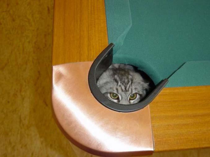 Μέρη που πιθανότατα δεν θα ψάχνατε για τη γάτα σας (11)