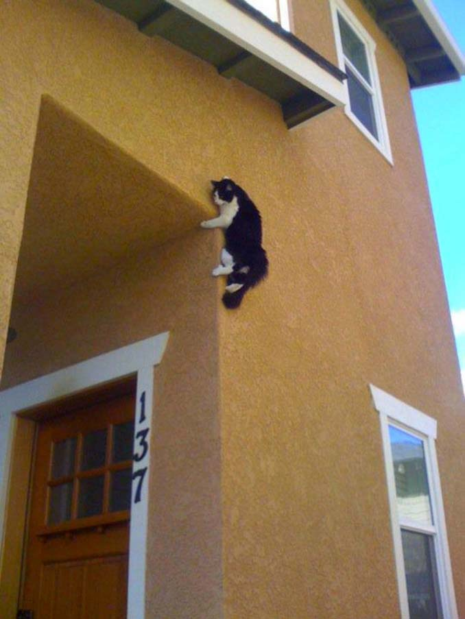 Μέρη που πιθανότατα δεν θα ψάχνατε για τη γάτα σας (12)