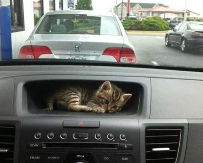 Μέρη που πιθανότατα δεν θα ψάχνατε για τη γάτα σας (16)