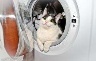 Μέρη που πιθανότατα δεν θα ψάχνατε για τη γάτα σας (17)