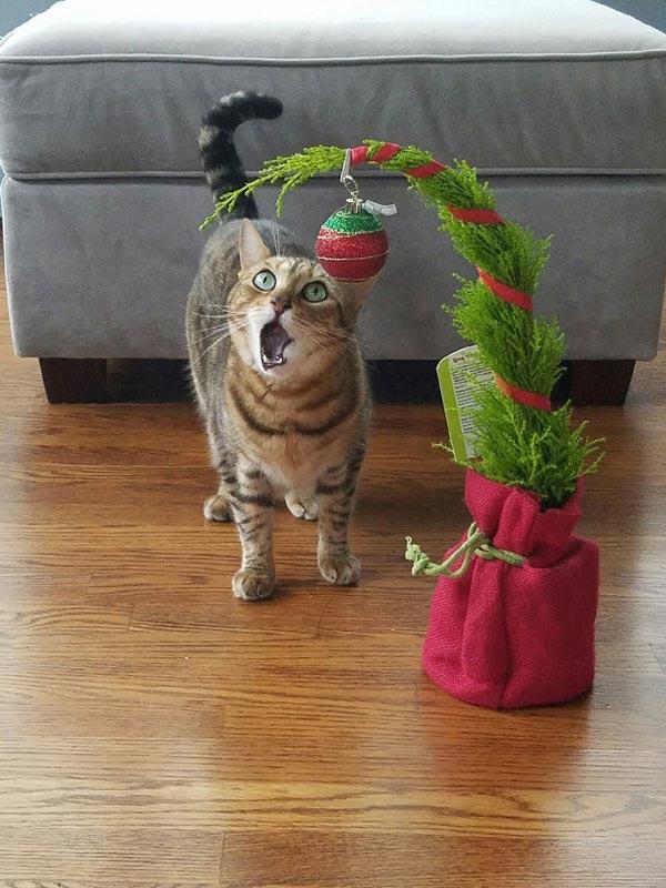 Όταν συνειδητοποιείς πως έφτασαν σχεδόν τα Χριστούγεννα | Φωτογραφία της ημέρας