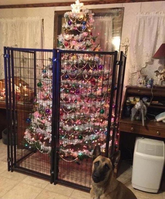Κάποιος δεν είναι να τον εμπιστεύεσαι με το χριστουγεννιάτικο δέντρο… | Φωτογραφία της ημέρας