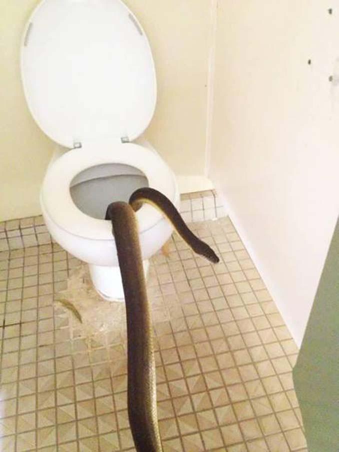 Στην Αυστραλία μία επίσκεψη στην τουαλέτα μπορεί να αποδειχτεί εφιαλτική εμπειρία (3)
