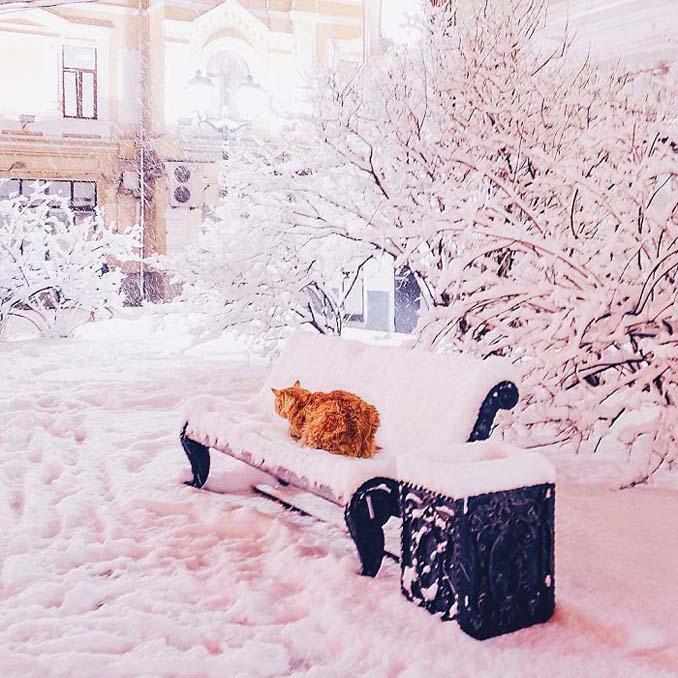 Η χειμωνιάτικη Μόσχα μοιάζει βγαλμένη από παραμύθι (30)