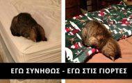 Χιουμοριστικές φωτογραφίες με... άρωμα Χριστουγέννων (1)