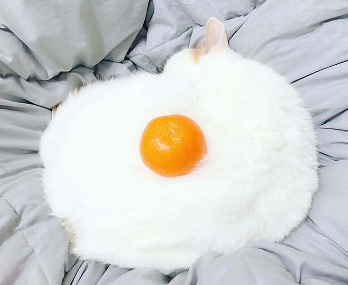 Το «αβγό» με την ύποπτη εμφάνιση που ξεκίνησε ένα Photoshop Battle (1)