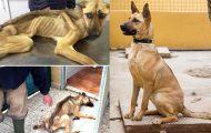 Εκπληκτικές μεταμορφώσεις σκύλων μετά την υιοθεσία