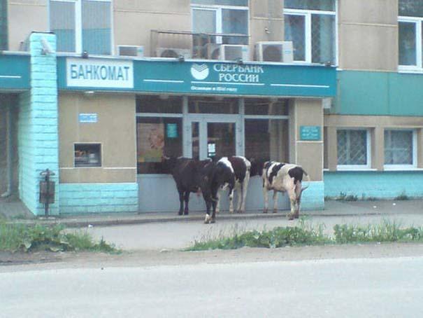 Εν τω μεταξύ, στη Ρωσία... #110 (3)