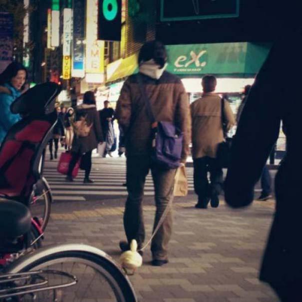 Εν τω μεταξύ, στην Ιαπωνία... #24 (11)