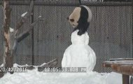 Η ξεκαρδιστική μάχη ενός πάντα με... χιονάνθρωπο