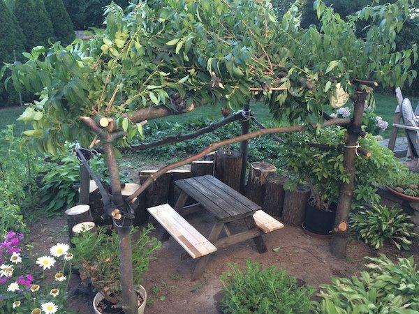 Δημιουργικός μπαμπάς μετέτρεψε ένα άρρωστο δέντρο σε παραμυθένιο κήπο για την κόρη του (1)