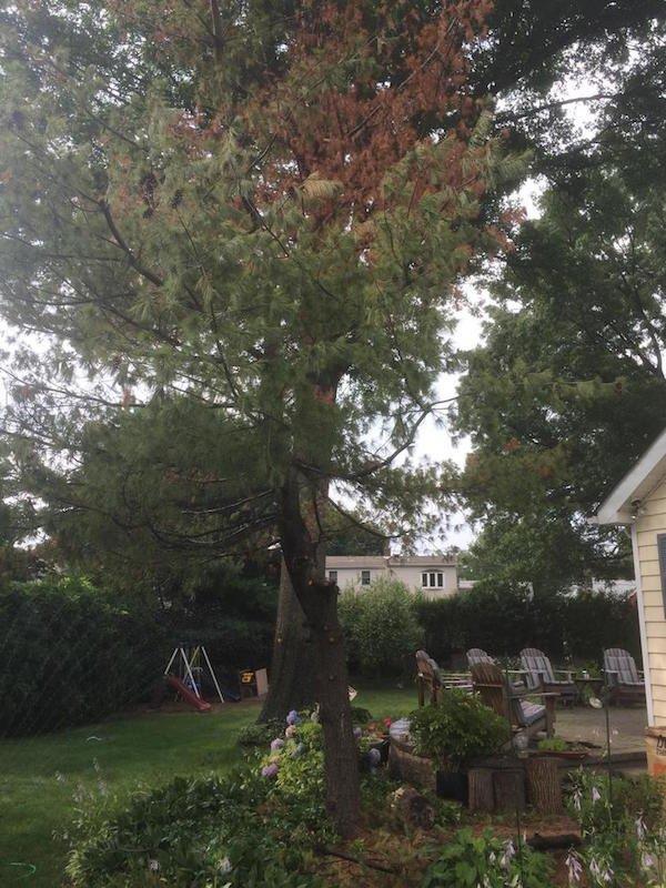 Δημιουργικός μπαμπάς μετέτρεψε ένα άρρωστο δέντρο σε παραμυθένιο κήπο για την κόρη του (2)