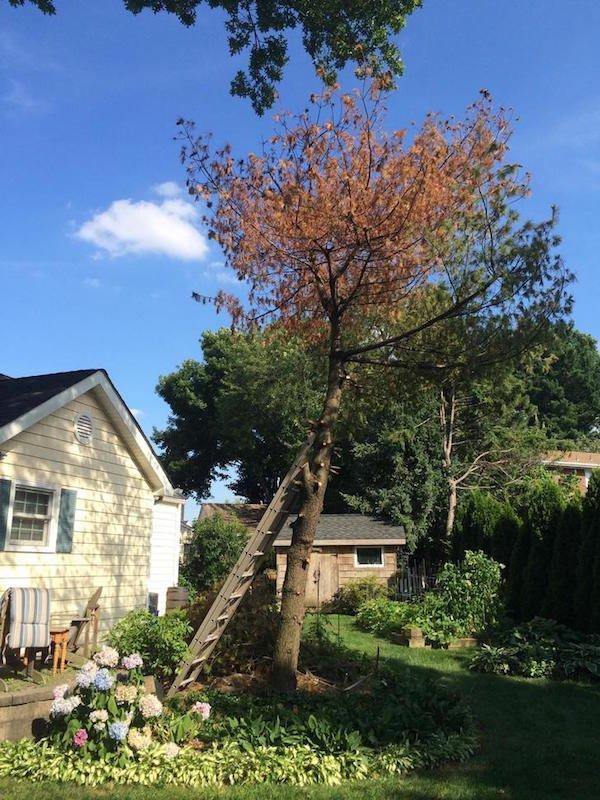 Δημιουργικός μπαμπάς μετέτρεψε ένα άρρωστο δέντρο σε παραμυθένιο κήπο για την κόρη του (3)