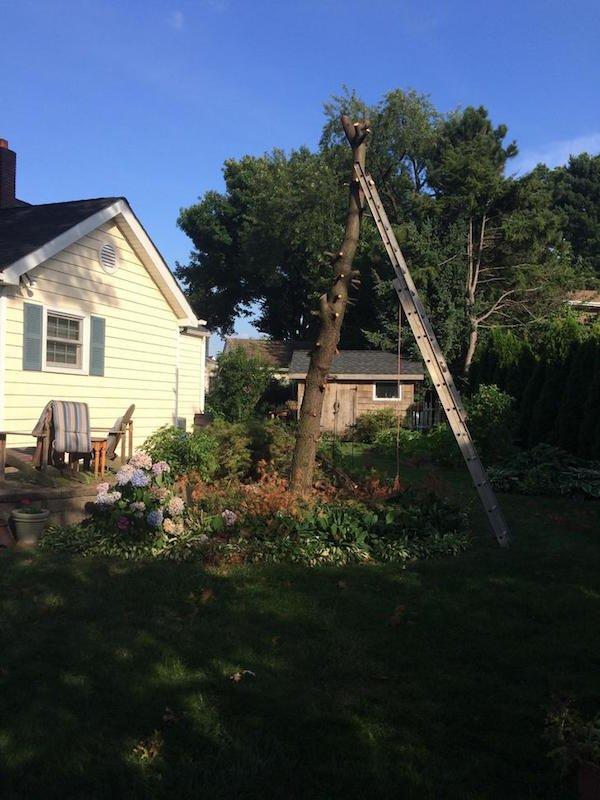 Δημιουργικός μπαμπάς μετέτρεψε ένα άρρωστο δέντρο σε παραμυθένιο κήπο για την κόρη του (4)