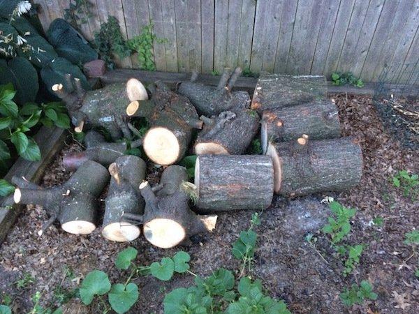 Δημιουργικός μπαμπάς μετέτρεψε ένα άρρωστο δέντρο σε παραμυθένιο κήπο για την κόρη του (6)