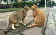 Μια θλιβερή γατοιστορία αγάπης... (1)