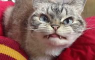 Οι πιο τσαντισμένες γάτες στον κόσμο (8)