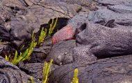 Όταν η φύση προσπαθεί να επιβιώσει ενάντια στη λάβα