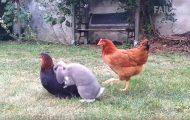 Όταν τα ζώα της φάρμας... κάνουν τρέλες!