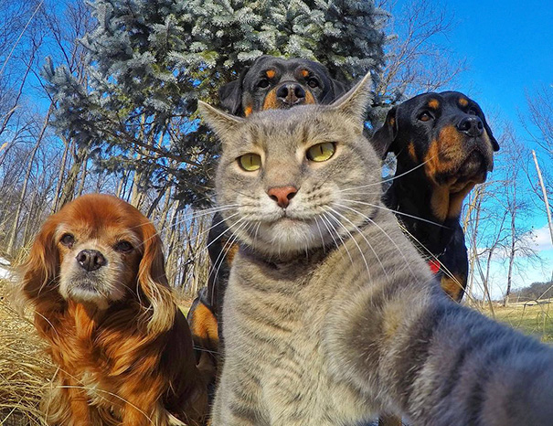 Όταν τα ζώα βγάζουν selfies (2)