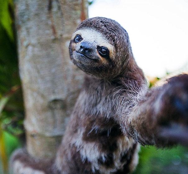 Όταν τα ζώα βγάζουν selfies (4)