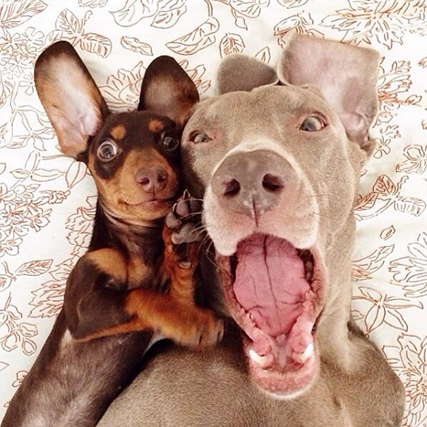 Όταν τα ζώα βγάζουν selfies (9)