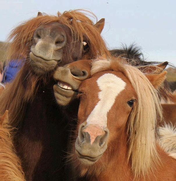 Όταν τα ζώα βγάζουν selfies (10)