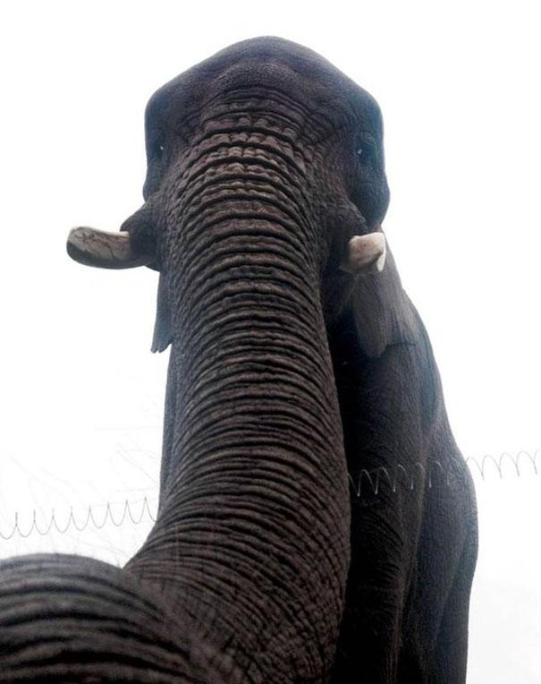 Όταν τα ζώα βγάζουν selfies (11)