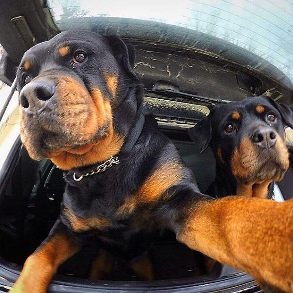 Όταν τα ζώα βγάζουν selfies (12)