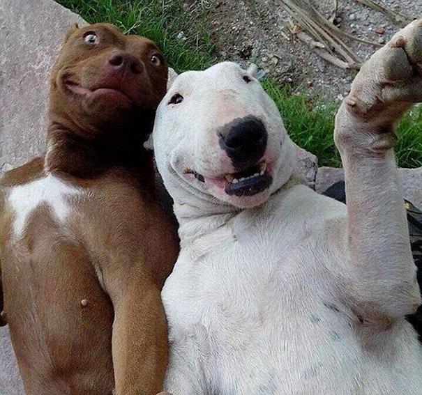 Όταν τα ζώα βγάζουν selfies (17)