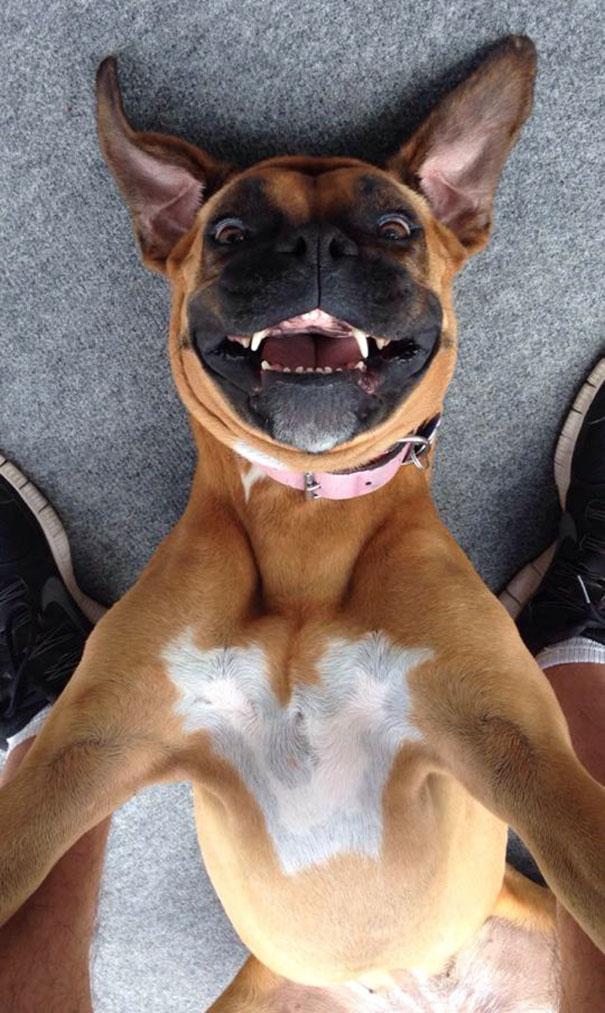 Όταν τα ζώα βγάζουν selfies (18)