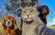 Όταν τα ζώα βγάζουν selfies