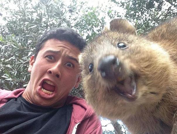 Όταν τα ζώα βγάζουν selfies (20)