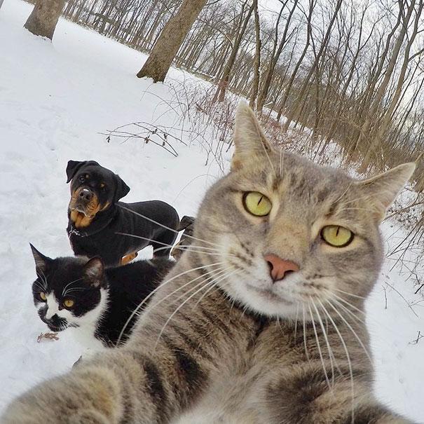 Όταν τα ζώα βγάζουν selfies (21)