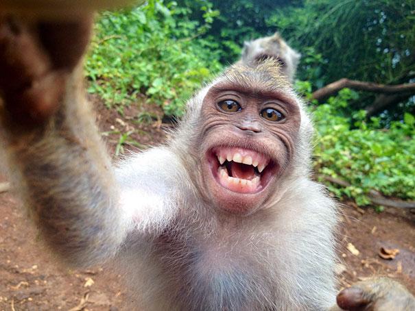 Όταν τα ζώα βγάζουν selfies (24)