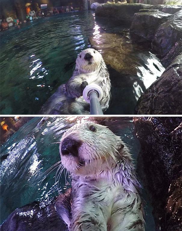 Όταν τα ζώα βγάζουν selfies (28)