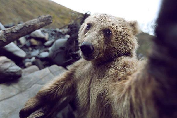 Όταν τα ζώα βγάζουν selfies (29)