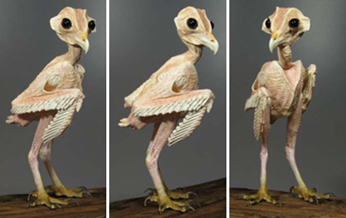 Θα πάθετε σοκ όταν δείτε πως είναι η κουκουβάγια χωρίς τα φτερά της (2)