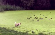 Σκύλος ανακαλύπτει πως το «γρασίδι» δεν είναι πάντα αυτό που φαίνεται
