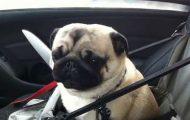 Σκύλος τρελαίνεται μόλις καταλαβαίνει ότι έφτασε στο pet store
