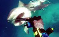 Η τρομακτική στιγμή που ένας δύτης δέχεται επίθεση από καρχαρία ταύρο