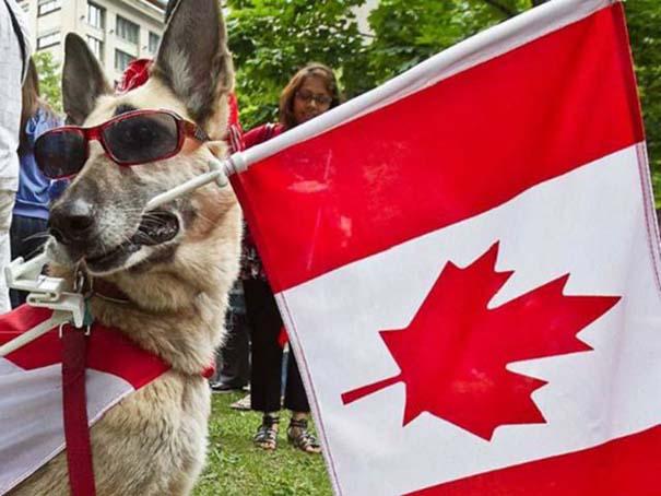 Εν τω μεταξύ, στον Καναδά... #18 (7)
