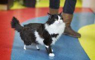 Δείτε τη γάτα που περπατάει ξανά χάρη σε βιονικά πόδια (7)