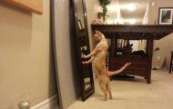 Γάτες που... κάνουν τα δικά τους! #42