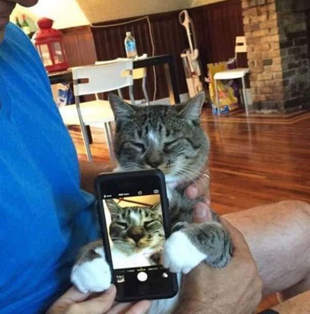 Γάτες που... κάνουν τα δικά τους! #43 (2)